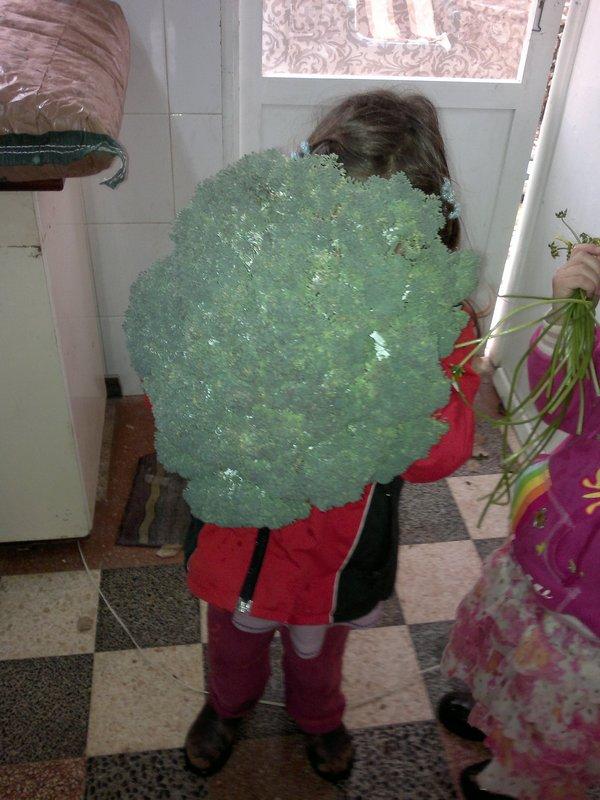 ילדה בת חמש מסתתרת מאחורי ברוקולי